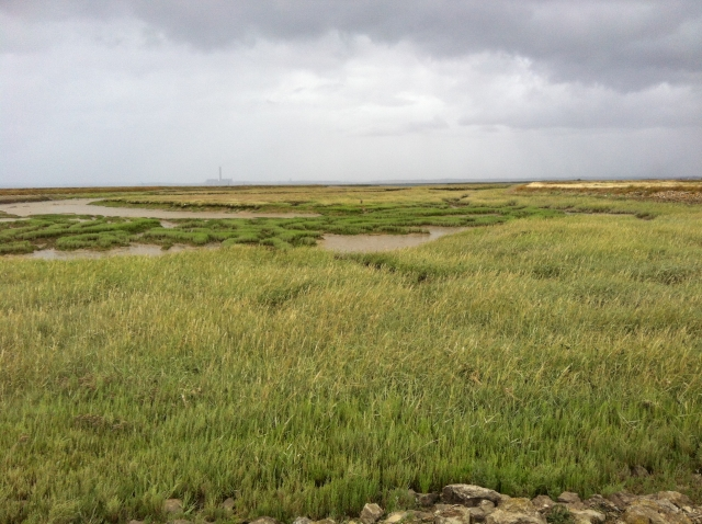 Carbon Storage in Intertidal Environments - Volunteer samplers needed
